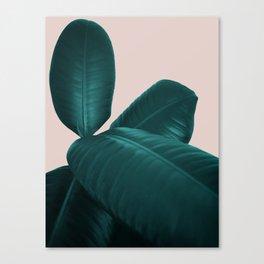 Ficus Elastica #4 #art #society6 Canvas Print