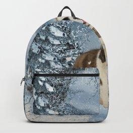Beautiful dog Backpack