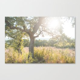 Sunrise in the Texas Hill Country Canvas Print
