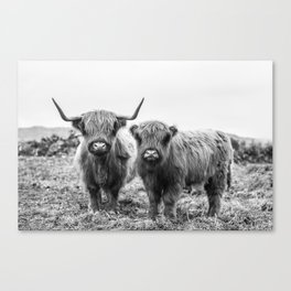 Highland Cow & Calf Canvas Print