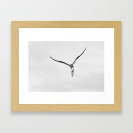 Bird of Prey Carrying Fish Framed Art Print