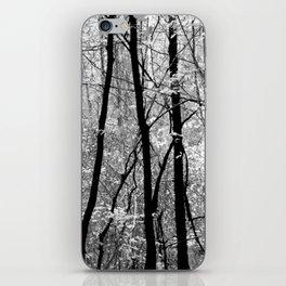 Forest (Pennsylvania) iPhone Skin