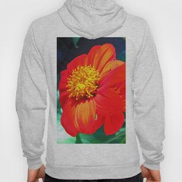 Tithonia Mexican Sunflower Hoody