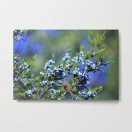 Light Blue Juniper Berries Metal Print