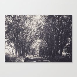 Tunnel of Trees - Kauai, Hawaii Canvas Print
