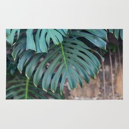 Monstera Print, Tropical Green Beauty Rug