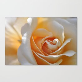Pegasus Rose Canvas Print