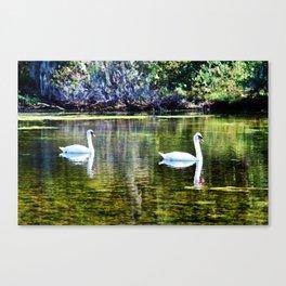 Swans At The Lake Canvas Print