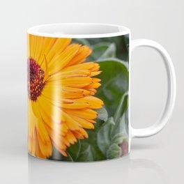 orange yellow gerbera daisy in the vase Coffee Mug