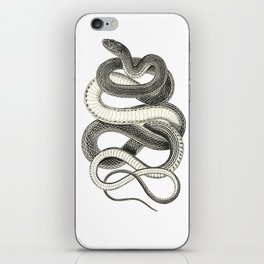 snake vintage style print serpent black and white 1800's iPhone Skin