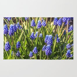 Grape hyacinths muscari Rug
