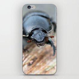 Close-up of a Dor / Dumbledore Dung Beetle iPhone Skin