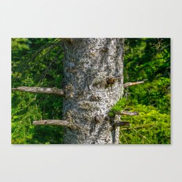 Tree Trunk with short thick Branch Stumps Canvas Print
