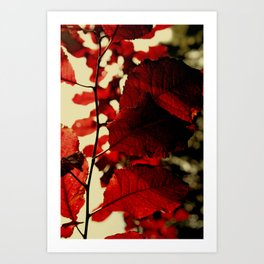 Leaves 1 Art Print