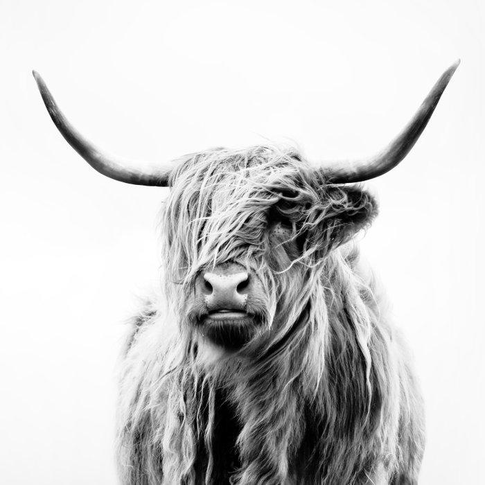 portrait of a highland cow Duvet Cover