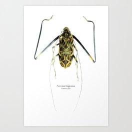 Acrocinus II Art Print