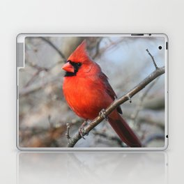 Male Northern Cardinal Laptop & iPad Skin