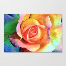LGBT rose Canvas Print