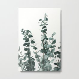 Eucalyptus Leaves Metal Print