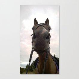 Funny Horse Canvas Print