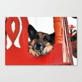Sad Dog In Red Balcony. Closer Photo Canvas Print