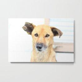 Floppy Ear Puppy Metal Print