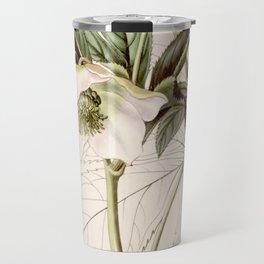 Helleborus orientalis Travel Mug