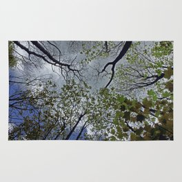 Tree canopy in the spring Rug