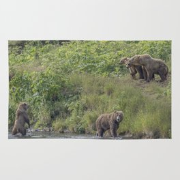 A Group of Kodiak Bears on Kodiak Island Rug
