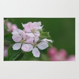 Classic Image Of Apple Tree Blossoms In The Garden In Spring Rug
