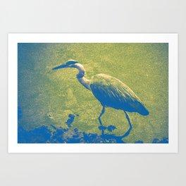 Blue (and Gold) Heron Art Print