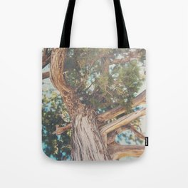 looking up through the leaves of the Juniper Tree ... Tote Bag