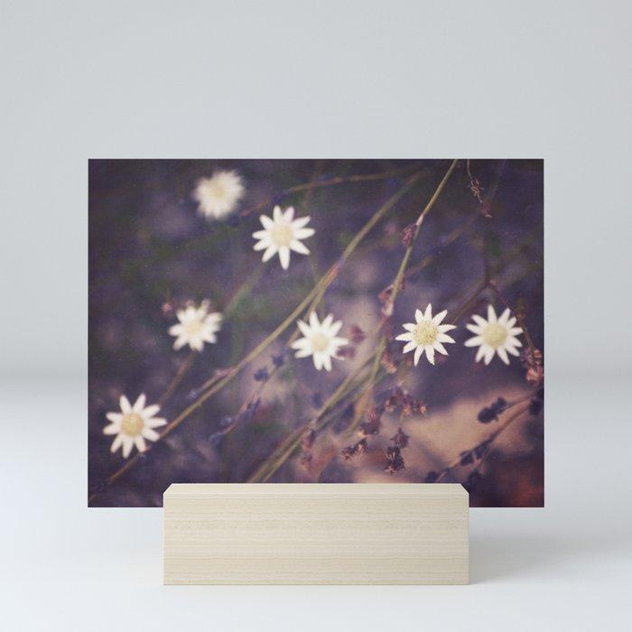 Miniature Flannel Flowers Mini Art Print