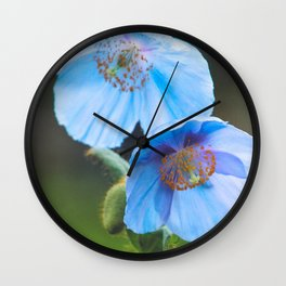 Himalayan Blue Poppy Wall Clock