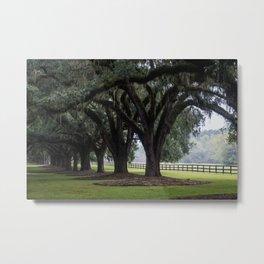 Tree Arch Drive Metal Print