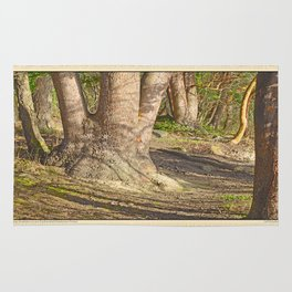Long Shadows in an Enchanted Madrona Forest Rug