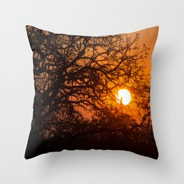 Sultry sun setting behind the sausage tree Throw Pillow