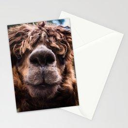 Curious Llama Stationery Cards