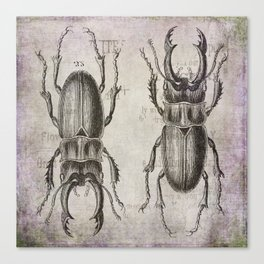 Grunge Style Stag Beetle Canvas Print