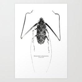Acrocinus I Art Print