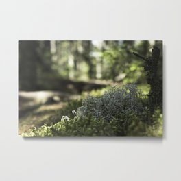 Mountain Forest Floor Metal Print