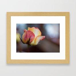 Pink Rose Framed Art Print