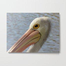 Australian Pelican #2 Metal Print