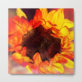 Close-up of a Bright Orange and Yellow Sunflower Metal Print