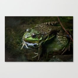 Frog Floating Canvas Print