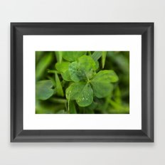 Magical Clover - Lucky Irish Clover Framed Art Print