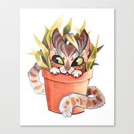 Cat Plant  Canvas Print