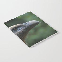 Griffon Vulture Notebook