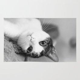 Upside down cat Rug