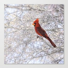 Red Cardinal Along the Salt River Canvas Print